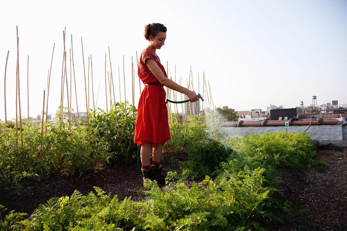 Annie Novak of Eagle Creek Farm, Brooklyn NYC
