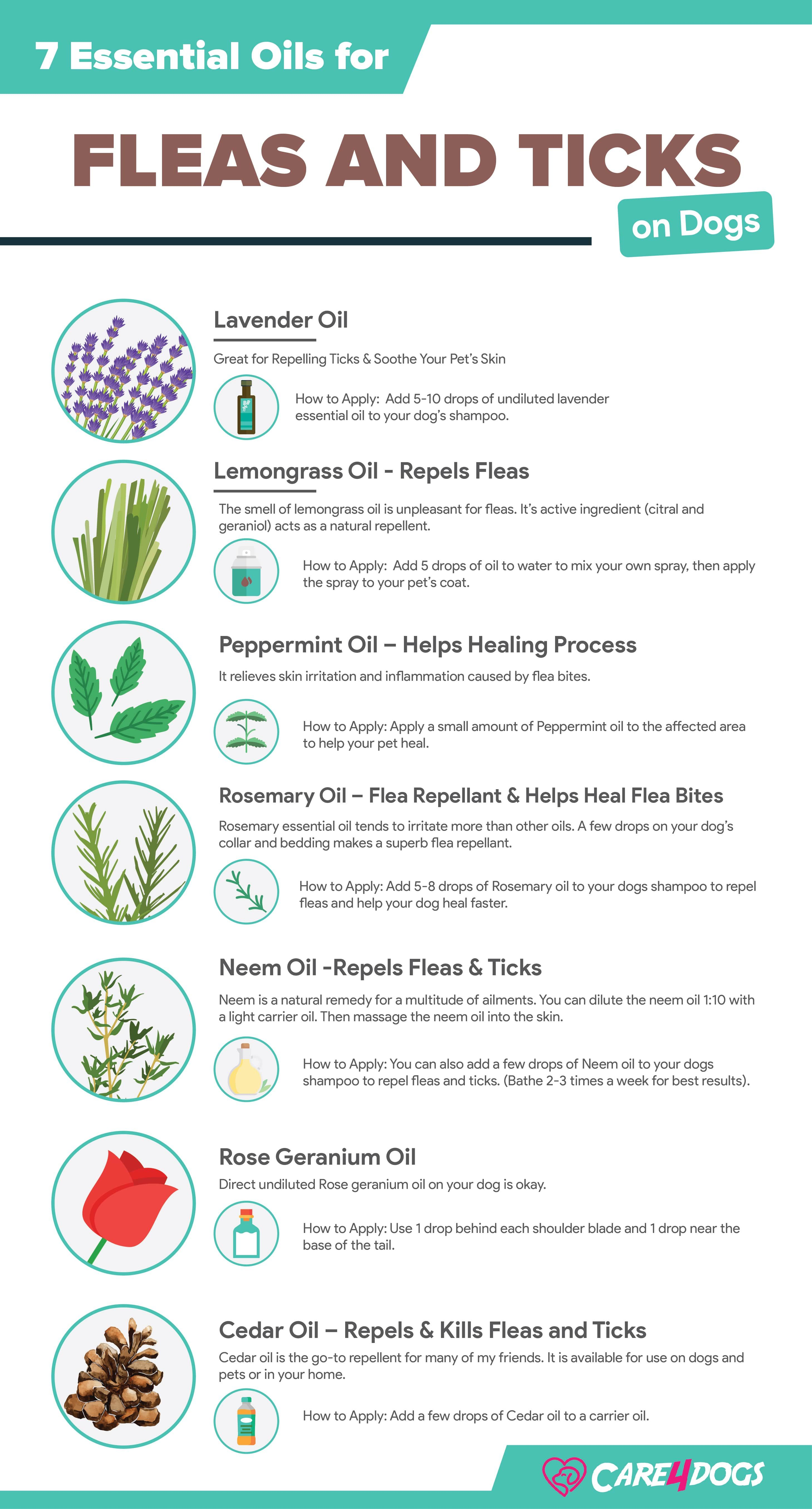 Top Safest And Most Toxic Essential Oils For Fleas And