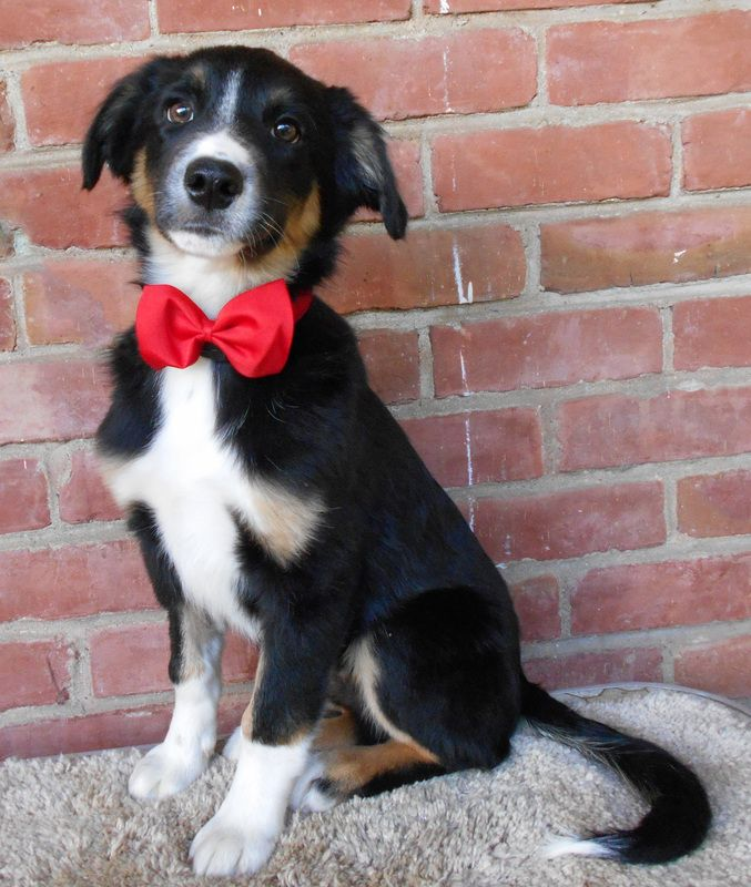 Marco Border Collie Rescue Of Northern California Border Collie Rescue Collie Rescue Collie
