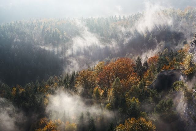 Autumn Forest In Fog And Sunlight Desktop Wallpapers Photography Nature Photos Au Nature Desktop Wallpaper Desktop Wallpaper Fall Desktop Wallpaper Art