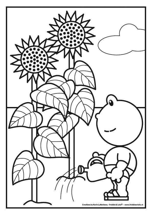 frokkie geeft de zonnebloemen water zonnebloemen