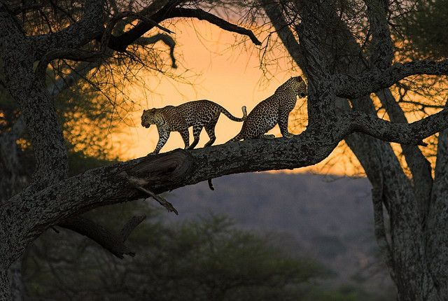 in Tarangire N.P. near Arusha, Tanzania