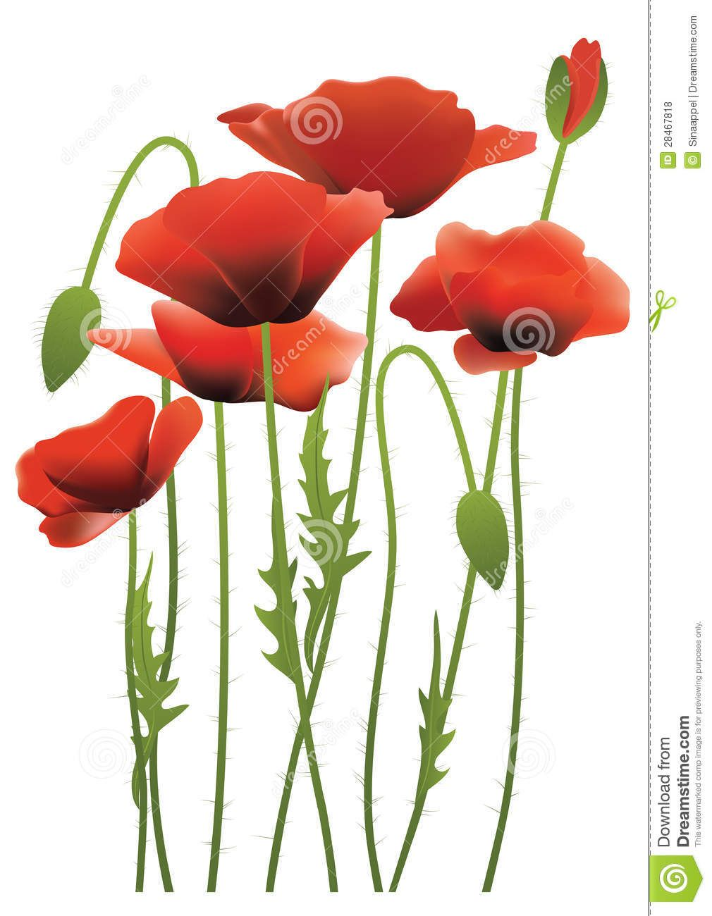 Image result for poppy flower Poppies, Red poppies