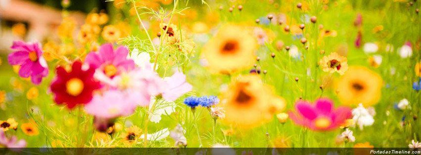 Naturaleza Archives Página 4 De 51 Portadas Para Facebook Imágenes Para Facebook Perfil Timeline Portadas Para Facebook Flores Portadas
