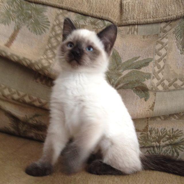 Princess Maia Here Kitty Kitty Kitty Cats