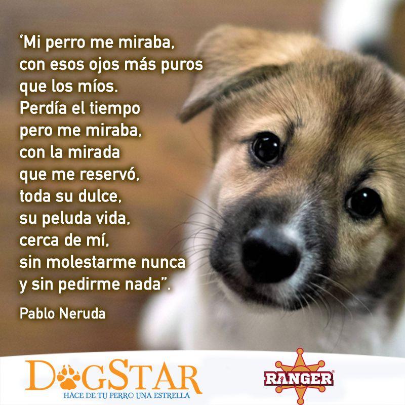 9 ideas de Amo a mi mascota | mascotas, perros, perros frases
