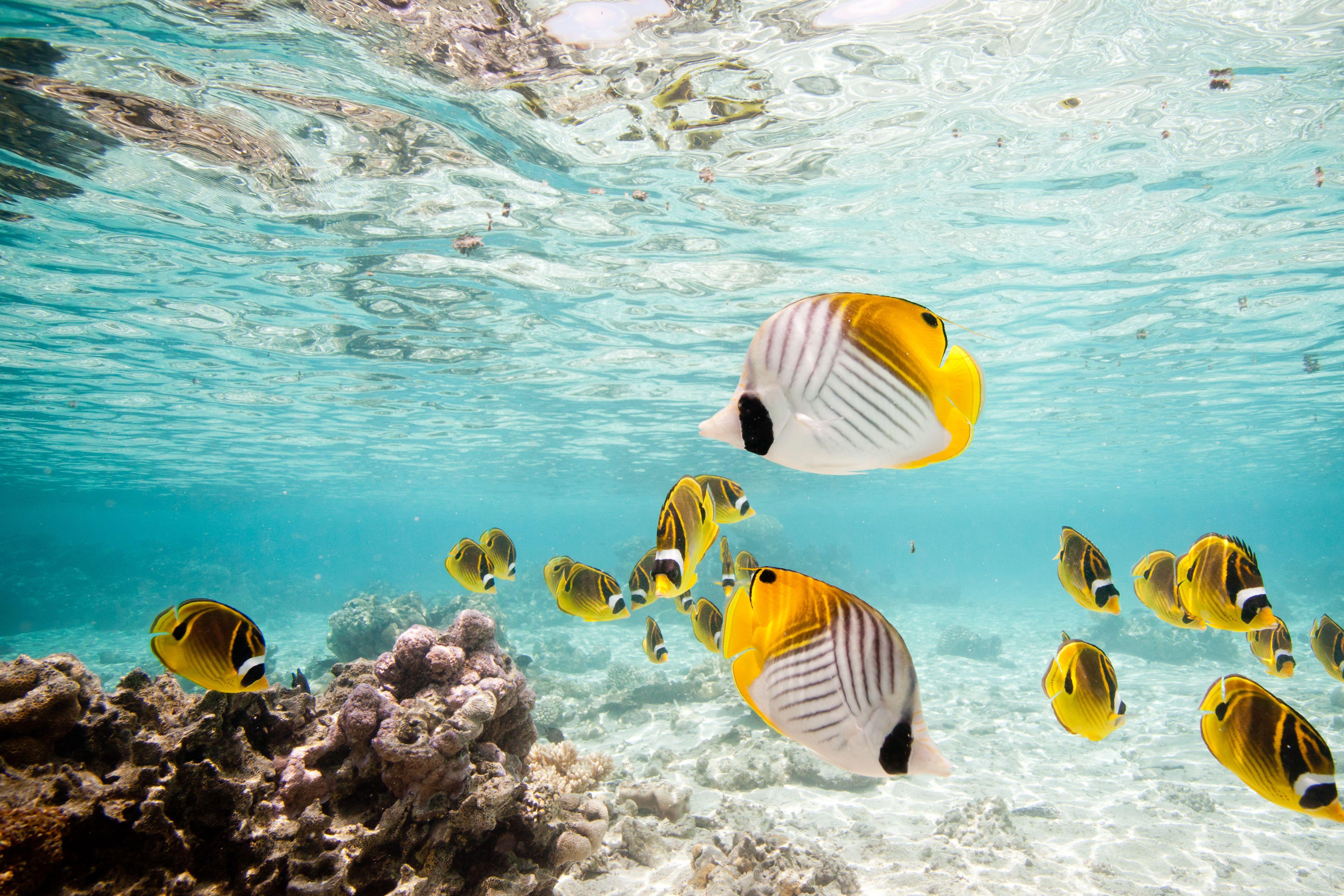 Best Snorkeling Beach In Rarotonga