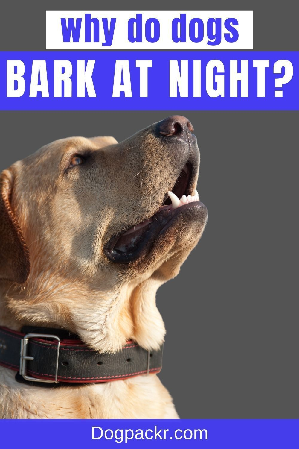 Why Do Dogs Bark At Night Mystery Resolved Dogpackr In 2021 Dog Barking At Night Dog Barking Dogs