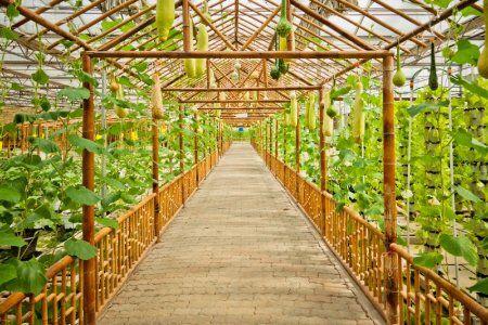 Kebun Hidroponik Mojokerto