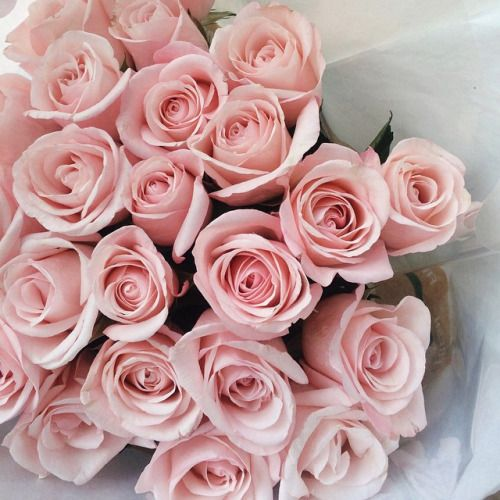 Pin By Sarah On Its De Lovely Flowers Pink Flowers Pink Roses
