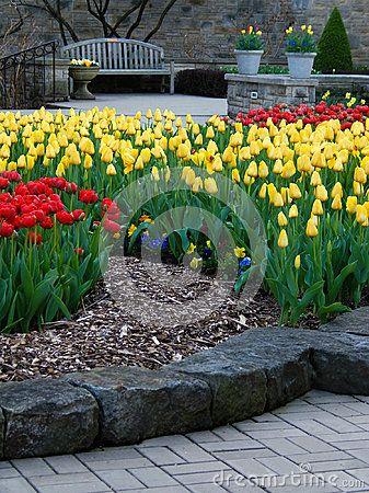 Vibrant Tulips In Bloom