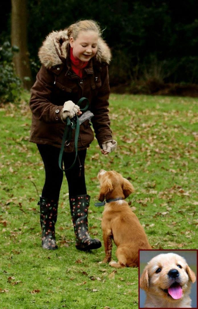 House Training A Puppy Fast And Does Clicker Training Work For All Dogs Dog Behavior Problems Dog Training