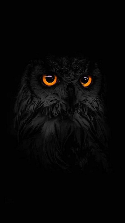 Dark Black Owl Iphone Wallpaper In 2019 Owl Wallpaper