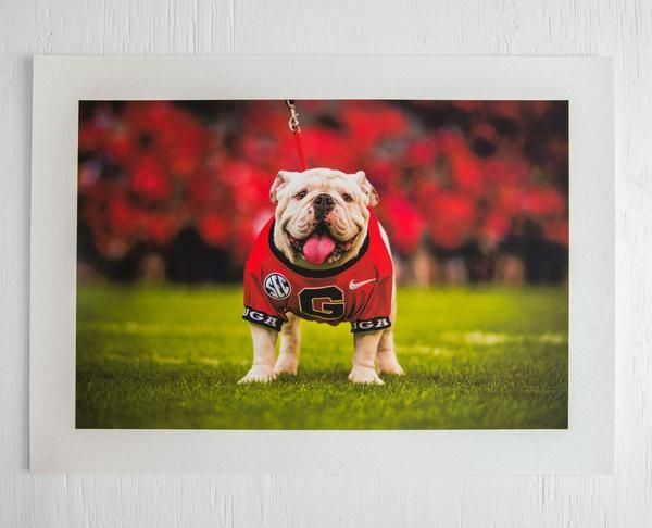 University Of Georgia Uga X Fine Art Print Team Teamwork Uga Georgia Bulldogs Bulldog Nation God Uga Georgia Georgia Bulldog Mascot Georgia Bulldogs
