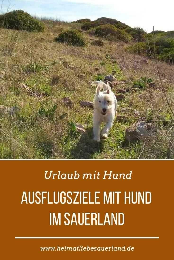 Ausflugsziele Mit Hund Im Sauerland Hund Reisen Ausflug Urlaub Mit Hund