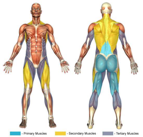 Straight Leg Deadlifts (Barbell) | Chunk Fitness | 30 Day ...
