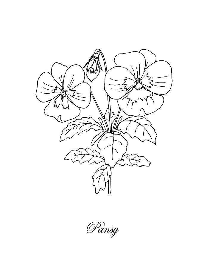 Pansy drawing | Etsy
