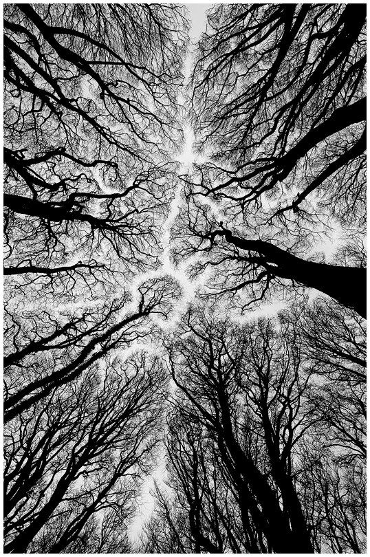 Looking Up At The Top Of The Trees Love The Path Of Space That S Created Where No Tree Branches White Photography Black And White Photography Black And White