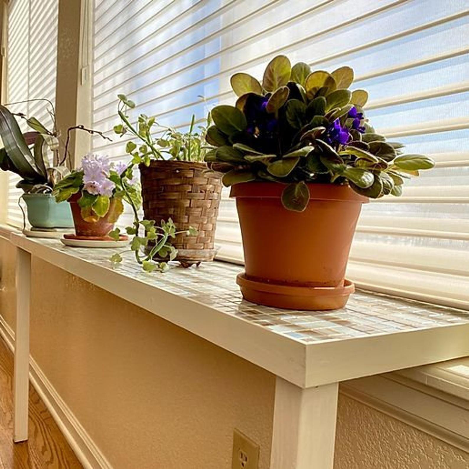 Window Sill Plant Table Plant Table Window Sill Window Plants