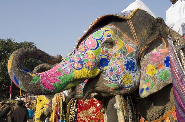 L'Eléphant , Mon Animal Préféré, Je Collectionne Les Figurines D