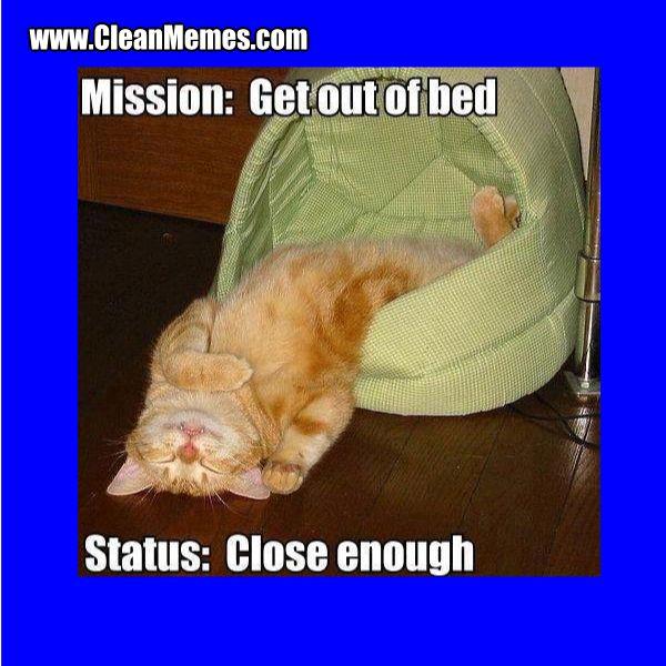 Funny Cat Meme Clean : Cat memes clean the best most online page