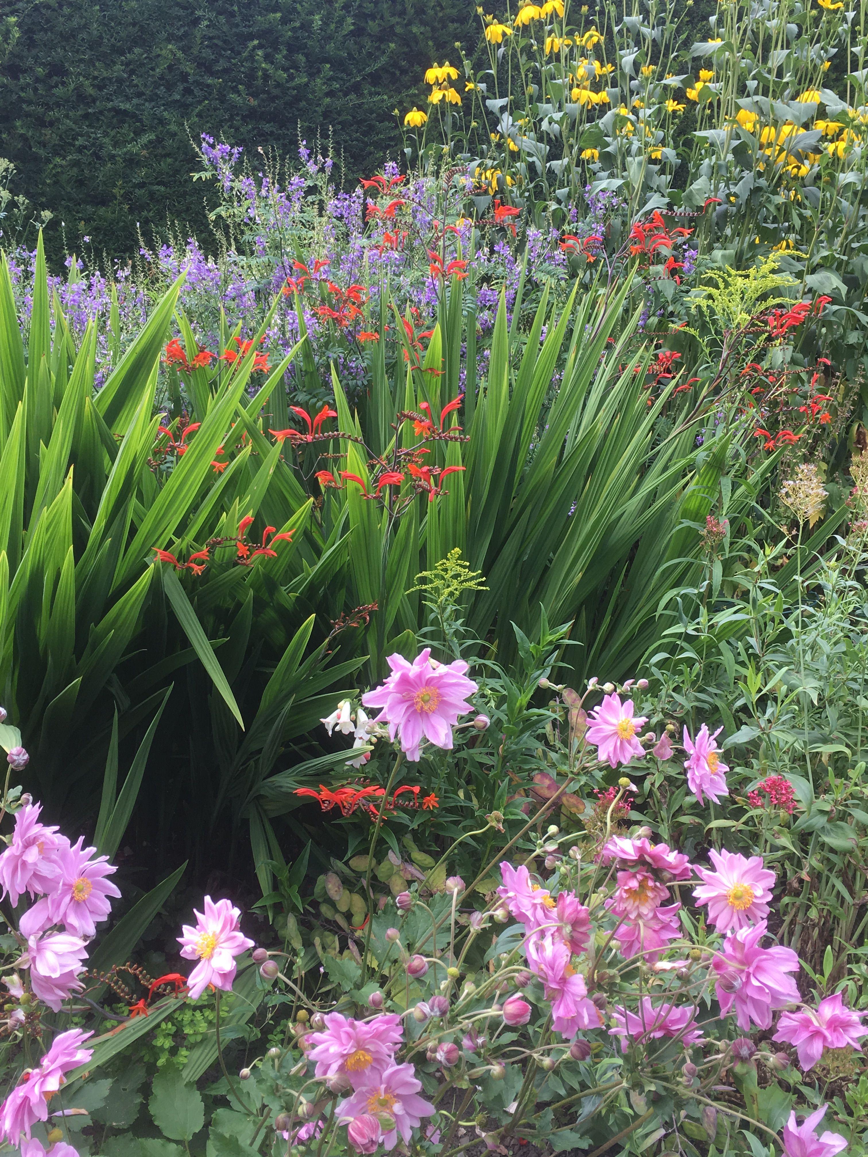 Garden Plants, Flower Gardening, Small Gardens, Beautiful Gardens, Cottage Gardens,