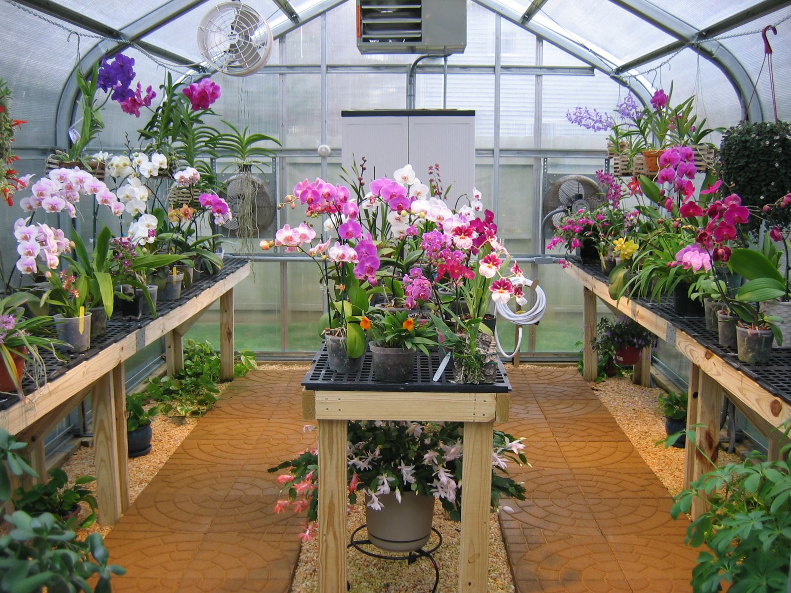 114 best orchid greenhouse ideas images on pinterest greenhouse