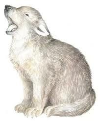 Image Result For Wolf Cub Drawing