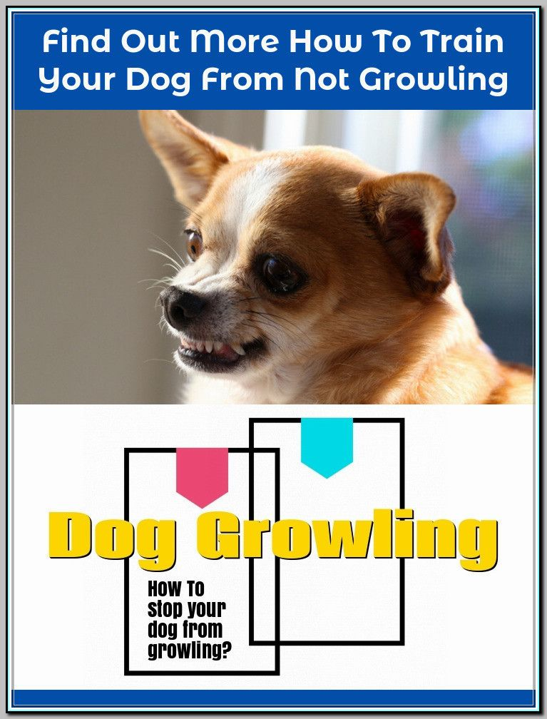 How To Get A Dog To Stop Growling At Someone