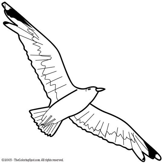 seagull in flight coloring pages - photo#28