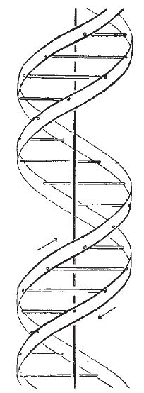 Google Image Result For Http Www Nature Com Scitable Content 4453 Watsoncrick 1953 Full Jpg Dna Tattoo Dna Drawing Dna