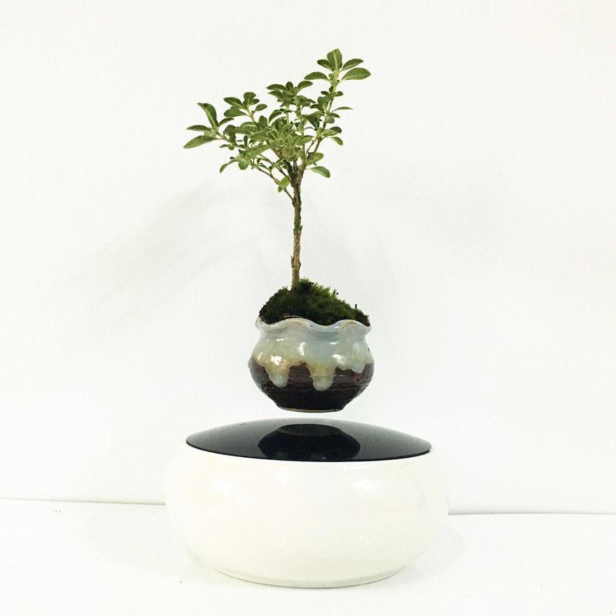 Japan high tech products magnetic levitation air bonsai for Levitating plant