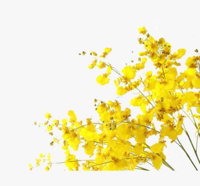 Yellow Flowers Yellow Flower Png Transparent Clipart Image And Psd File For Free Download Yellow Flowers Abstract Flower Art Line Art Flowers