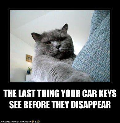 Lost Keys Funny Grumpy Cat Memes Grumpy Cat Humor Funny Cats