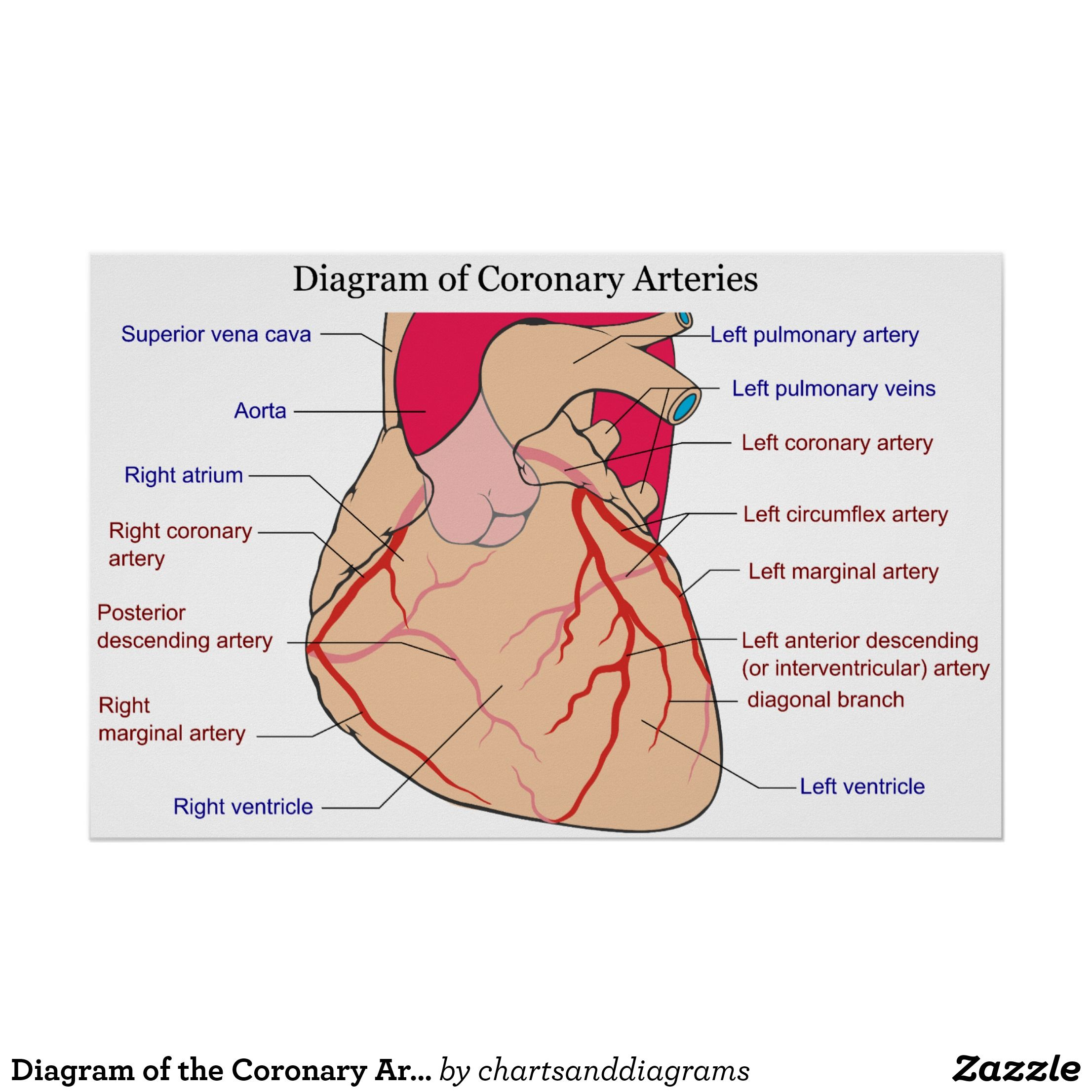 Coronary Anatomy Cath Topsimages