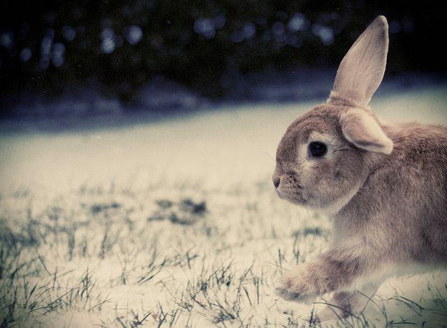 Snow bun run!