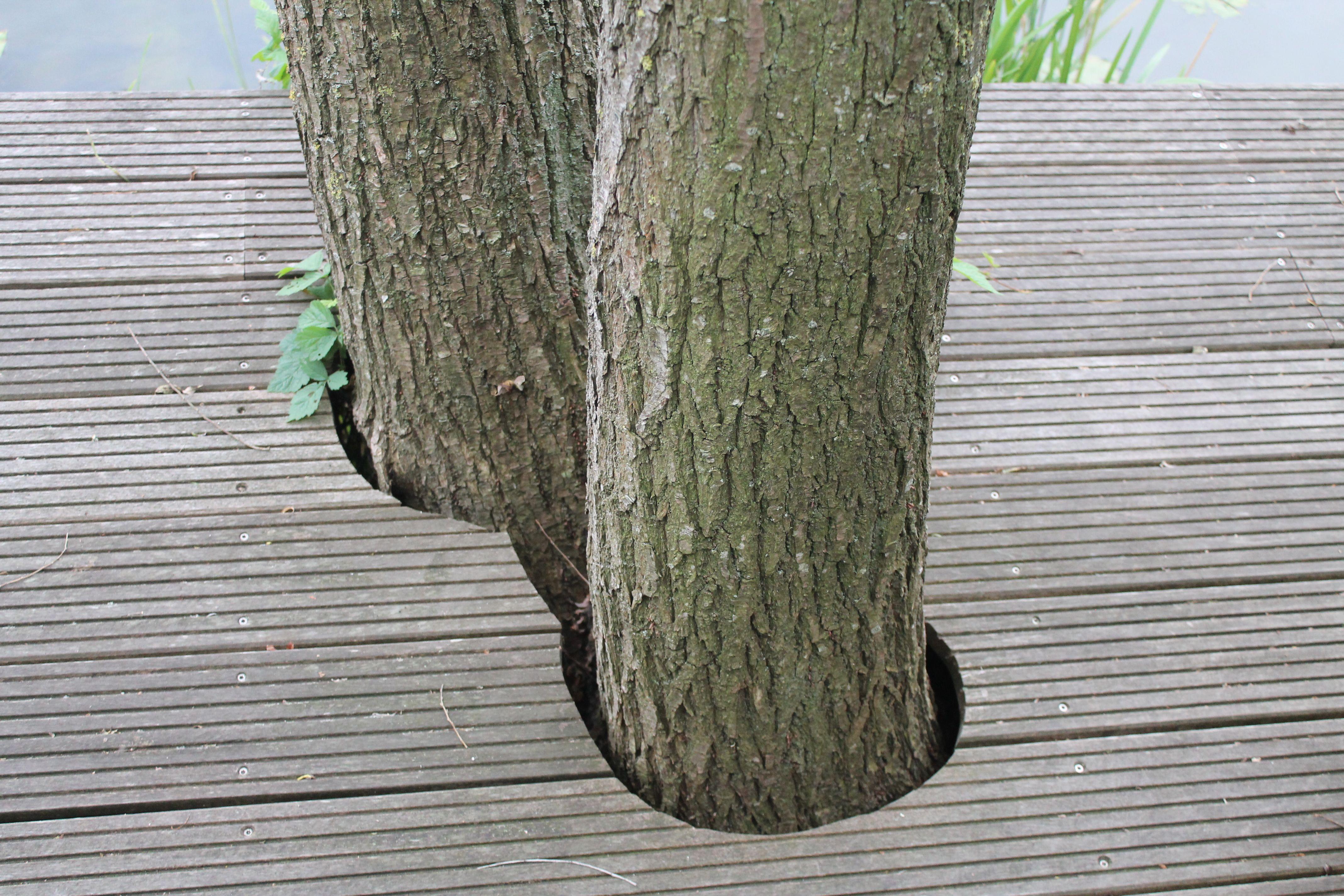 Slimme oplossing met bomen in de vlonder - Appeltern. Foto: Amber Aarts