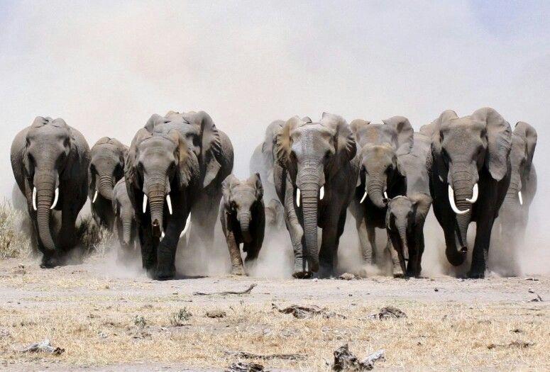 Manada De Elefantes Elefantes Fondo De Elefante Stuffed Animals