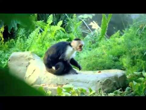 Katy Perry - Roar (Video Teaser)