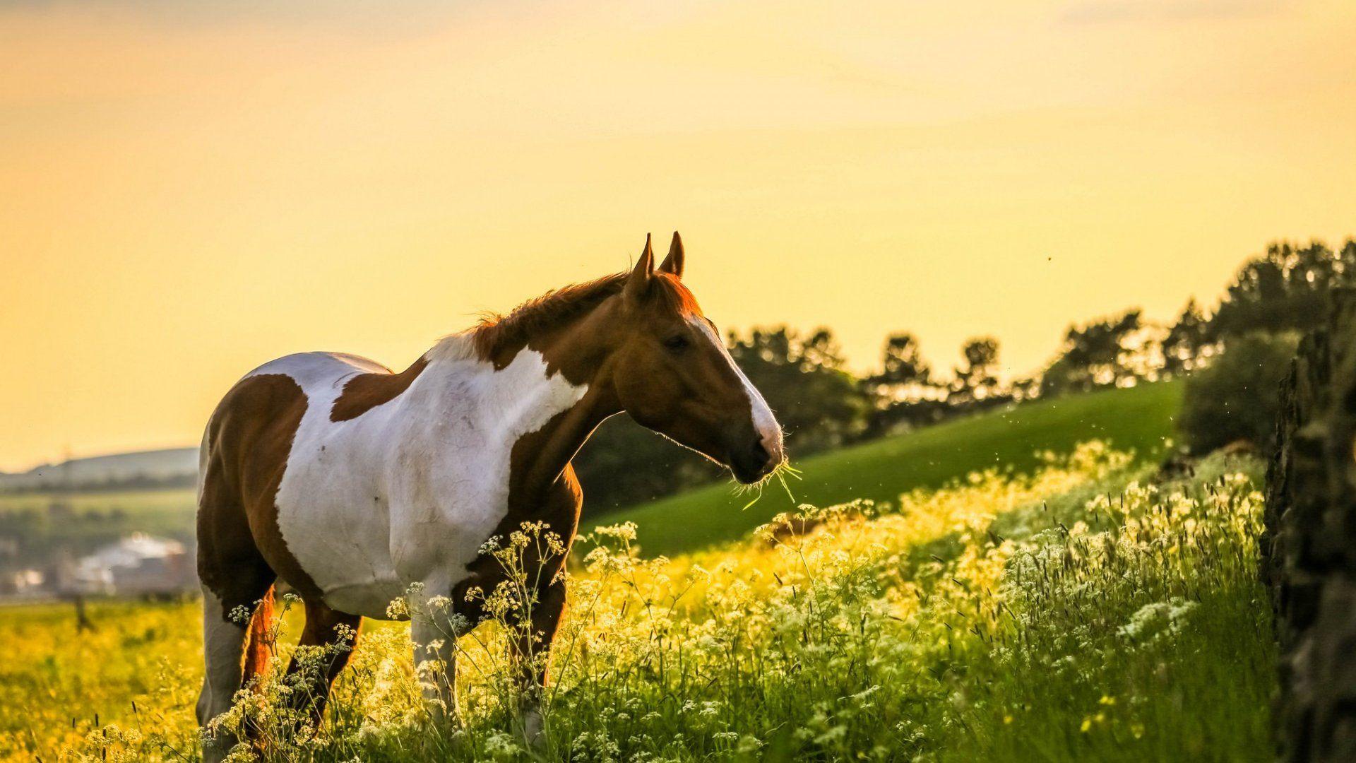 Фото и картинки лошадей: лучшее в 2020 г   Лошадь обои ...