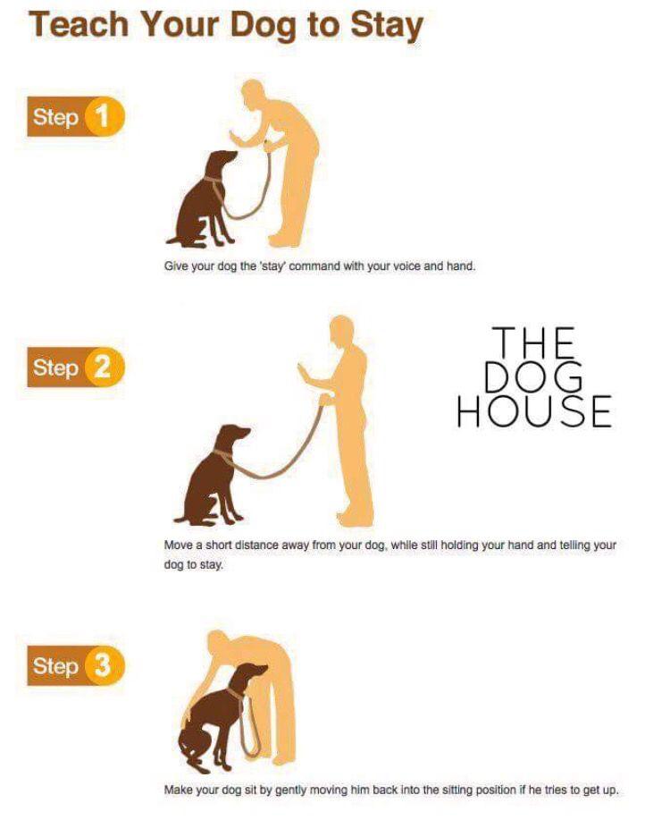 Teach Your Dog To Stay Dog Training Guide Dog Training Dog