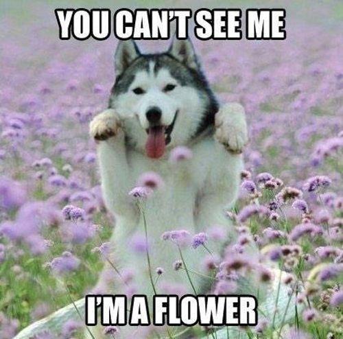 What a pretty flower! #dog