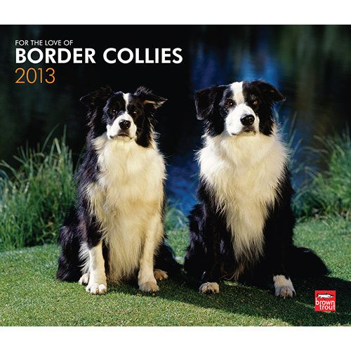 Looks Exactly Like Our Dog Boo He Was A Gentle Wonderful Pet Border Collie Collie Border