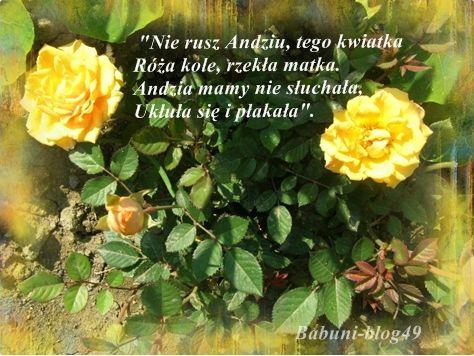 Babcia Radzi Cos Roze Kusicielki Plants