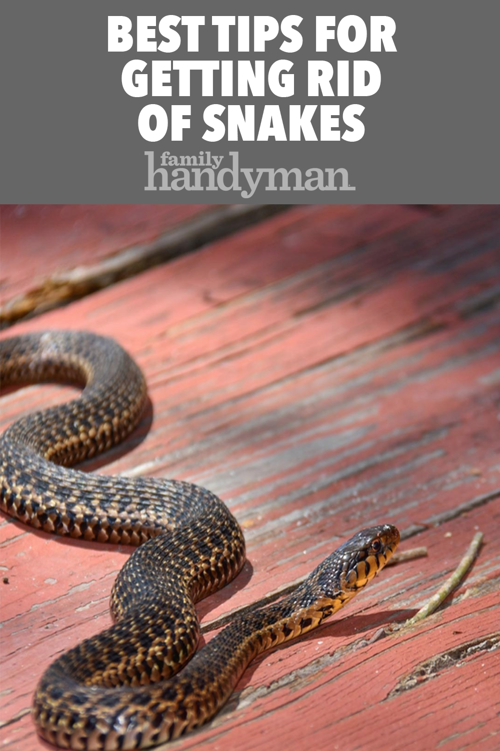 Unbelieveable Number Of Copperhead Snakes Removed From Va Home Richmond Charlottesville Virginia Virginia Professiona Baby Snakes Snake Poisonous Snakes