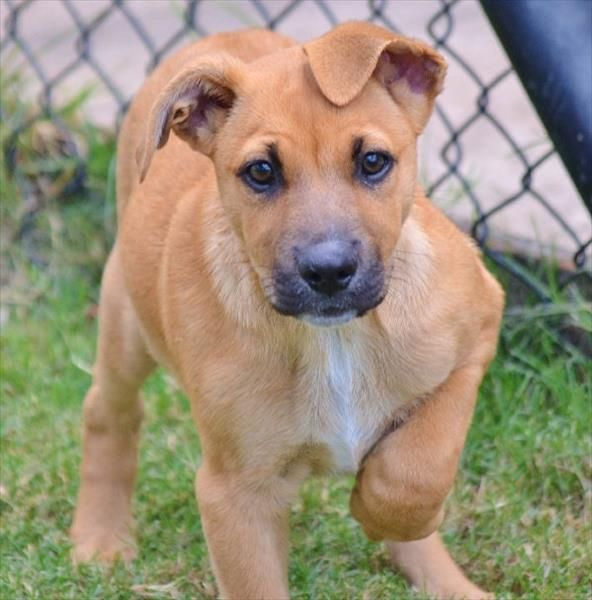 Did Someone Say Friday I M Stormy And I M Ready To Go Looking For A Cute And Active Puppy Pop In To The Noosa Animal Rescue Stories Animals Cute Animals