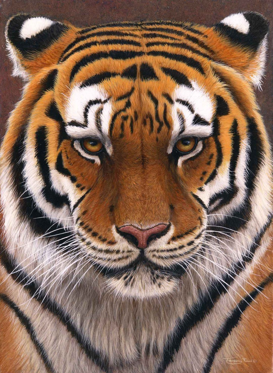 JP81 'Intense' Siberian Tiger in 2020 Siberian tiger