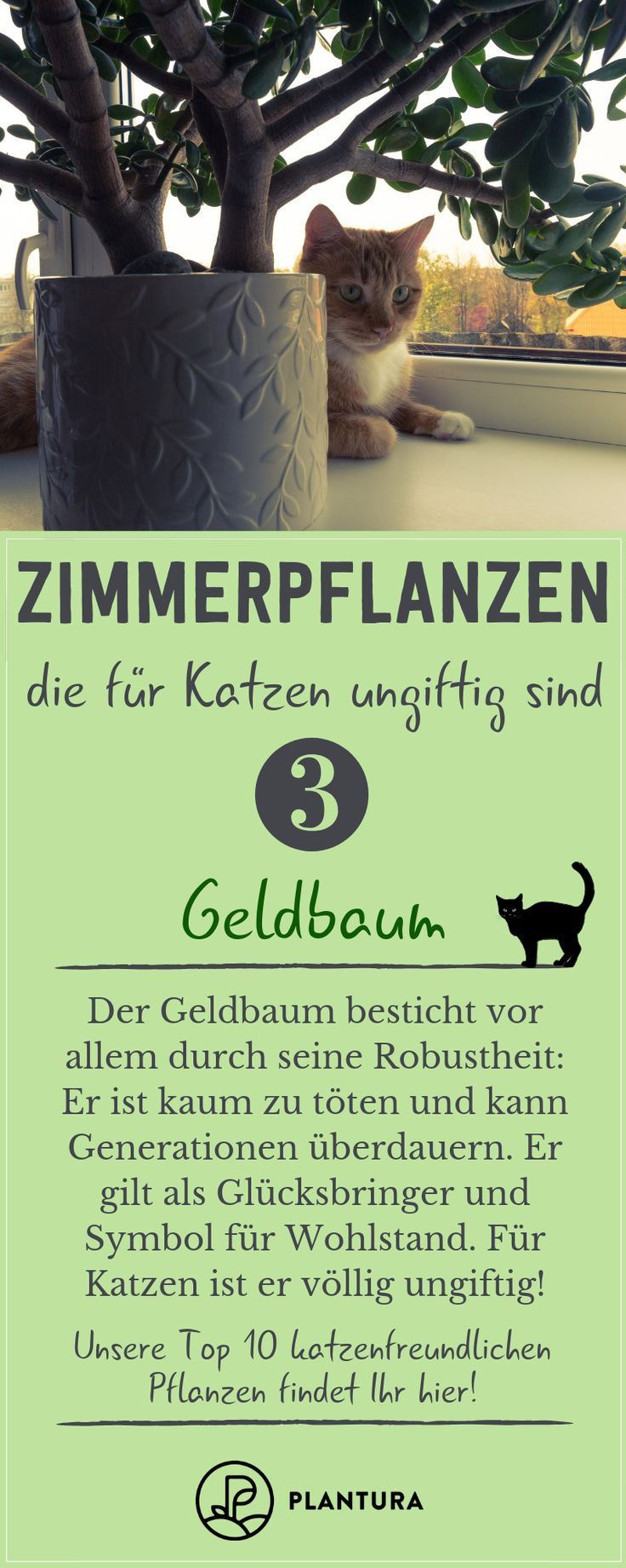 Ungiftige Zimmerpflanzen für Katzen Unsere Top 10 is part of Cat plants, House plants indoor, Houseplants, House plants, Money trees, Foliage plants - Welche Zimmerpflanzen sind ungefährlich für Katzen  Wir stellen 10 Pflanzen vor, die ungiftig und damit perfekt für Stubentiger geeignet sind
