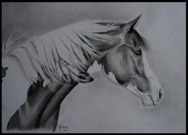Native American Horse Drawings 1abce3e01816e3e4b397bd1d27d78 ...