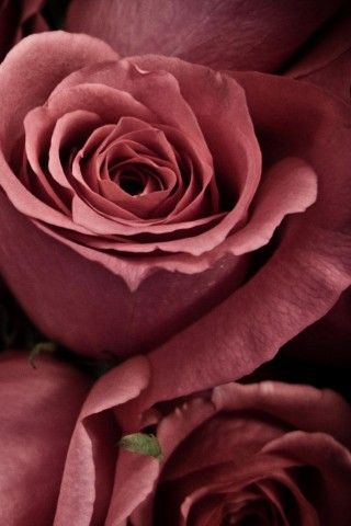 Valentine Love Roses Best Android Wallpaper Best Android Themes And Background Android Park Beautiful Roses Flowers Pretty Flowers